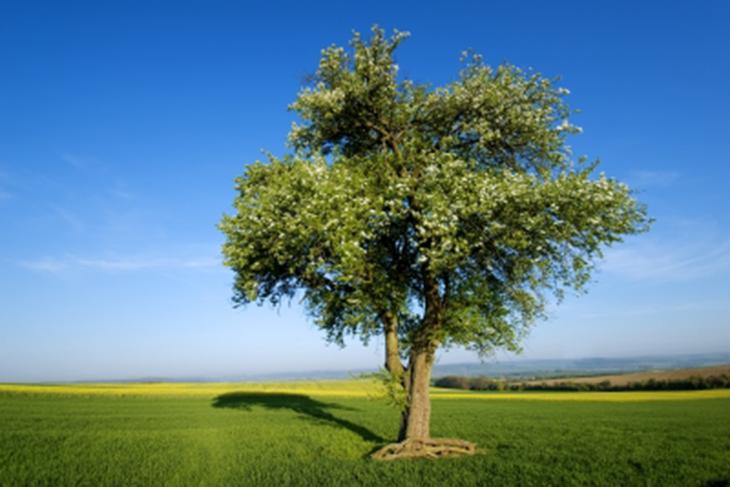 Pasos para plantar un rbol correctamente hab tala for Arboles para cierre de jardin